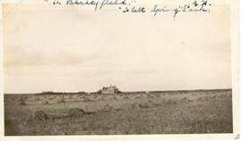 A barley field near Flett Springs, Sask.