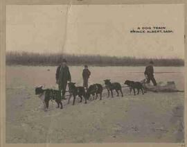 """A Dog Train Prince Albert, Sask."""
