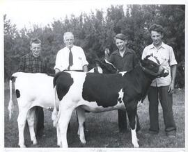 4-H Members with Holstein Heifers