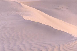 Dunes of the Great Sand Hills of Saskatchewan