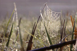 A spider web catching morning dew