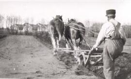 College of Agriculture - Horses - Plowing
